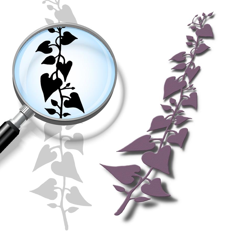 Ivy-Cutting-File.jpg