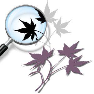 Maple Leaf (cutting file)