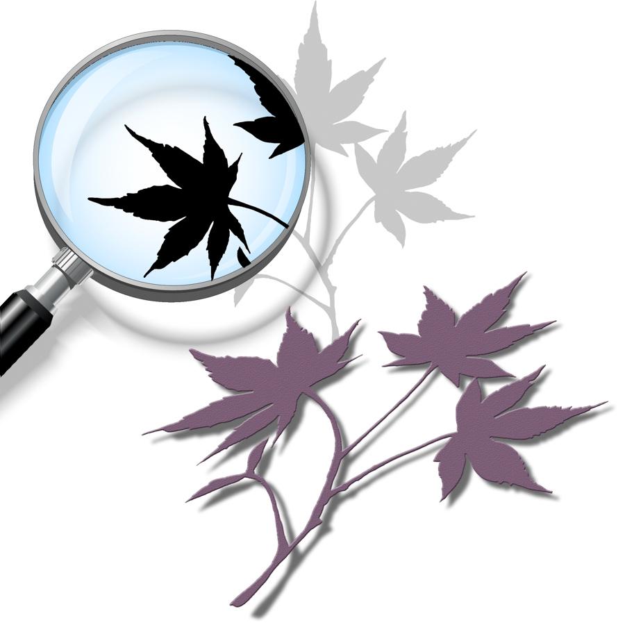 Maple-Leaf-Cutting-File.jpg