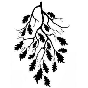 Oak-Leaf-Branch (digital)