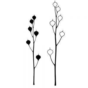 Seed-Heads (digital)