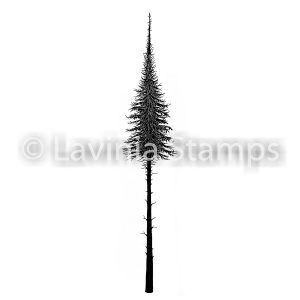 Fairy Fir Tree (Small)