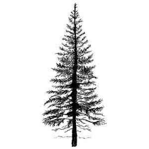 Fir Tree 1