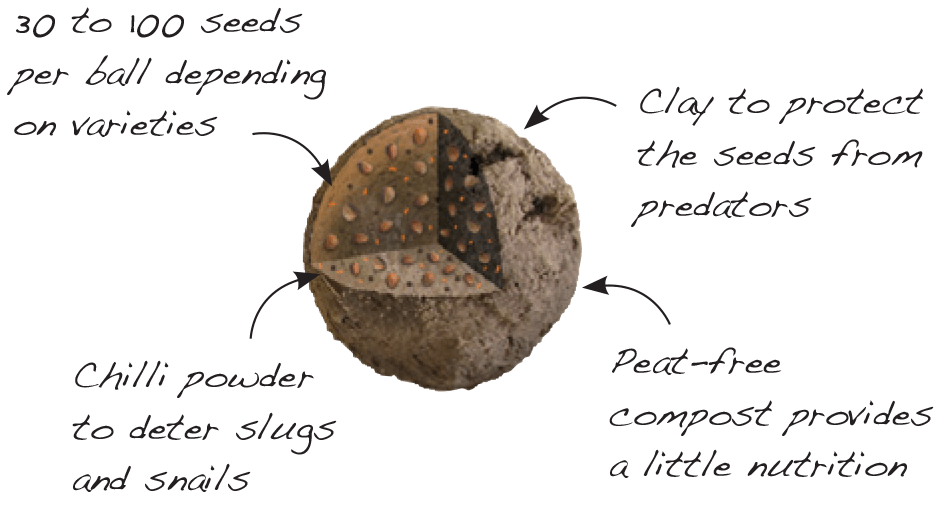 seedball-about_page-003
