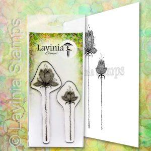 Lilium Set