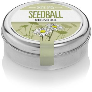 Oxeye Daisy Seedballs