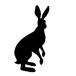 new-standing-hare