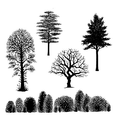 Landscape and trees