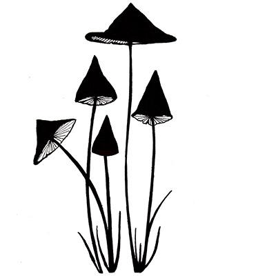 slender mushrooms  copy