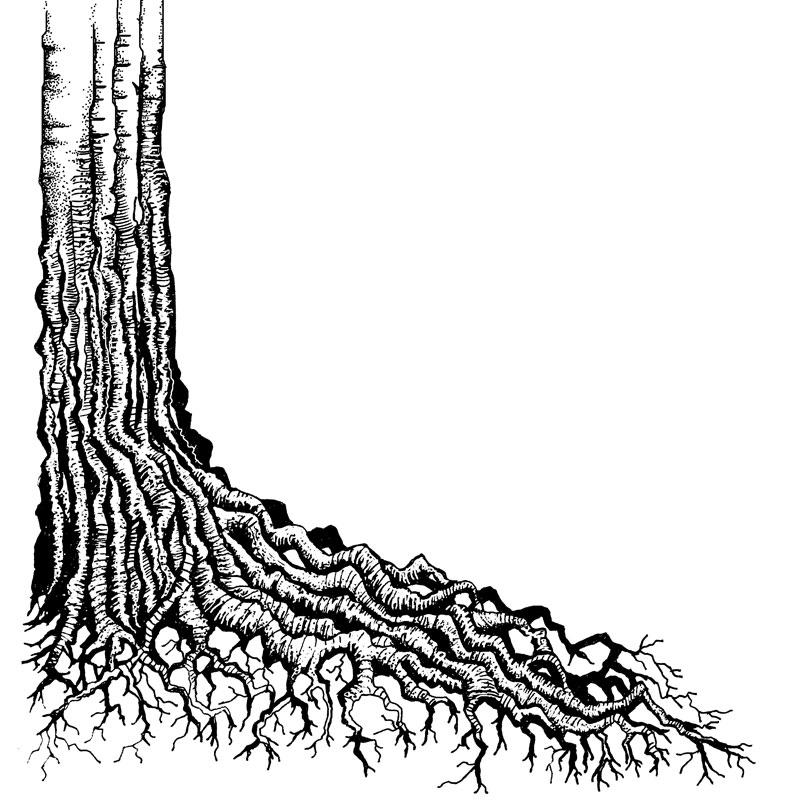 Tree Root Lavinia Stamps Ltd